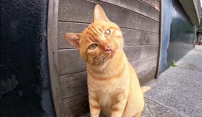 首をかしげる猫