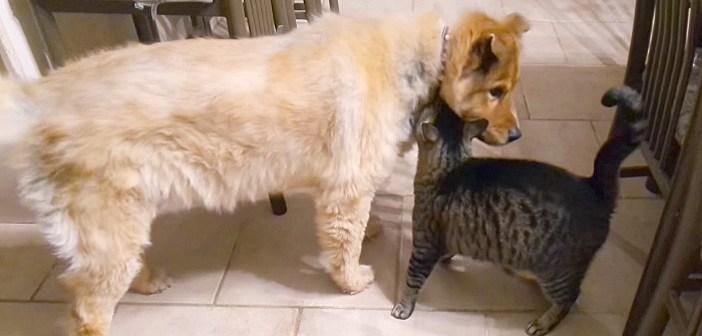 再会した犬と猫