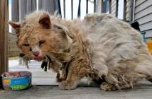 ボロボロの状態で見つかった猫