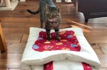 布団に乗る猫