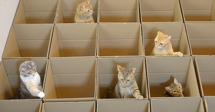 ダンボール箱と猫