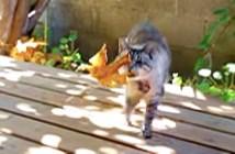 葉っぱを運んで来る猫