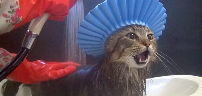 シャンプーハットを装着して無敵になった猫さん。でも、やっぱりちょっとドキドキするようで  ( *´艸`)♡