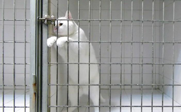 鍵を見る猫
