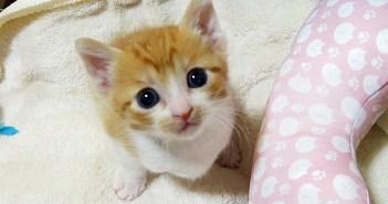 名前を覚えた子猫