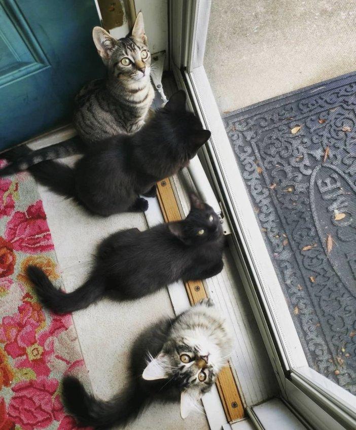 外を見る猫達