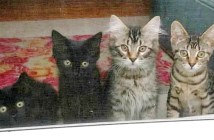 4匹の子猫達