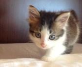 シッポを怪我した子猫が警備員室を訪ねてきた。猫好きの男性が預かり1週間が経つと、幸せいっぱいの展開に (*´ェ`*)