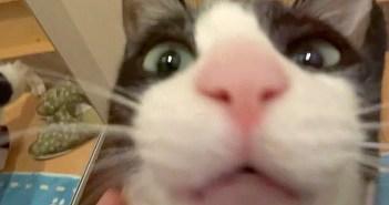 会いたい猫