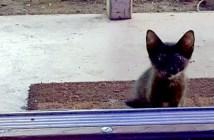 ドアの外の子猫