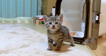 初めての家にドキドキする子猫
