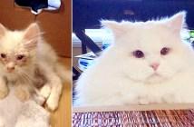 生まれ変わった猫