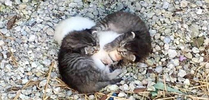 妹を抱きしめる兄猫達