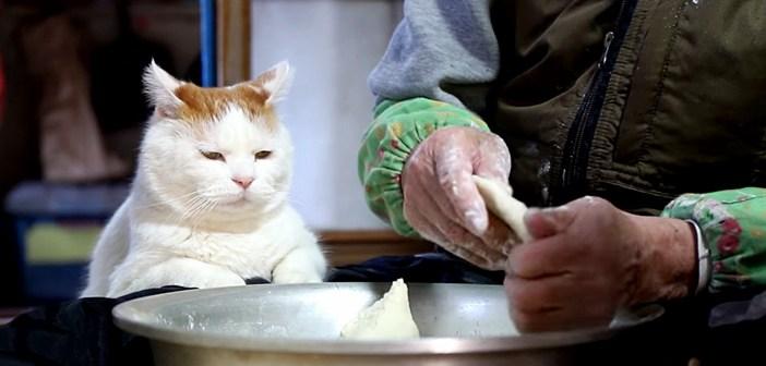 ひゅうずづくりを見つめる猫