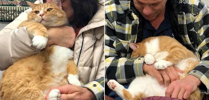保護された猫