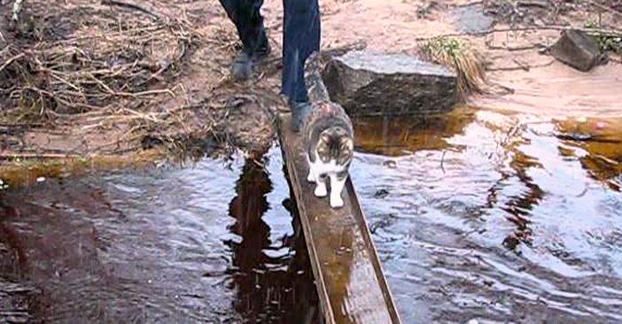肉球を濡らしたくない猫さん