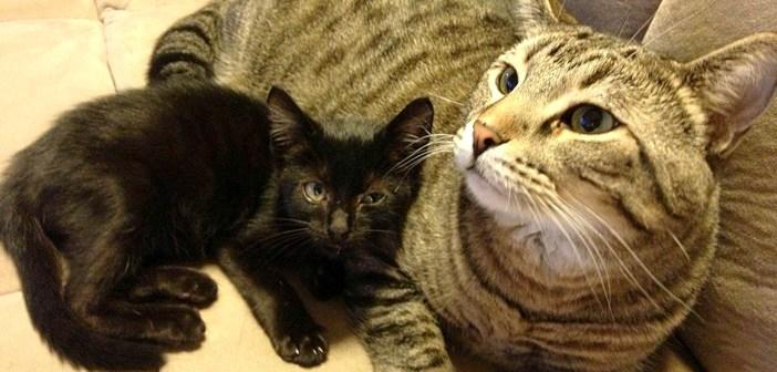 愛情を注ぎ合う猫達