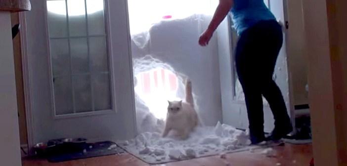 「今帰ったにゃー!」雪の壁を突き破って帰宅する猫さんに、飼い主さんも思わずビックリ (゚Д゚;)!