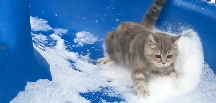 雪の積もった滑り台を、さっそうと滑り降りる猫さん。綺麗に雪を散らしながら、猛スピードで滑る姿に目を奪われる!
