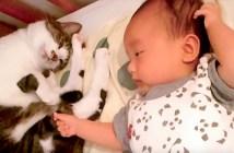 赤ちゃんをあやす猫