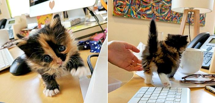 オフィスに来た子猫