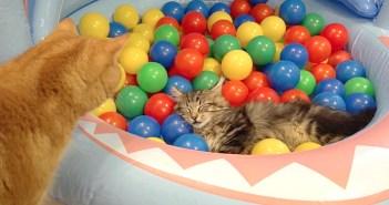 ボールプールと猫達
