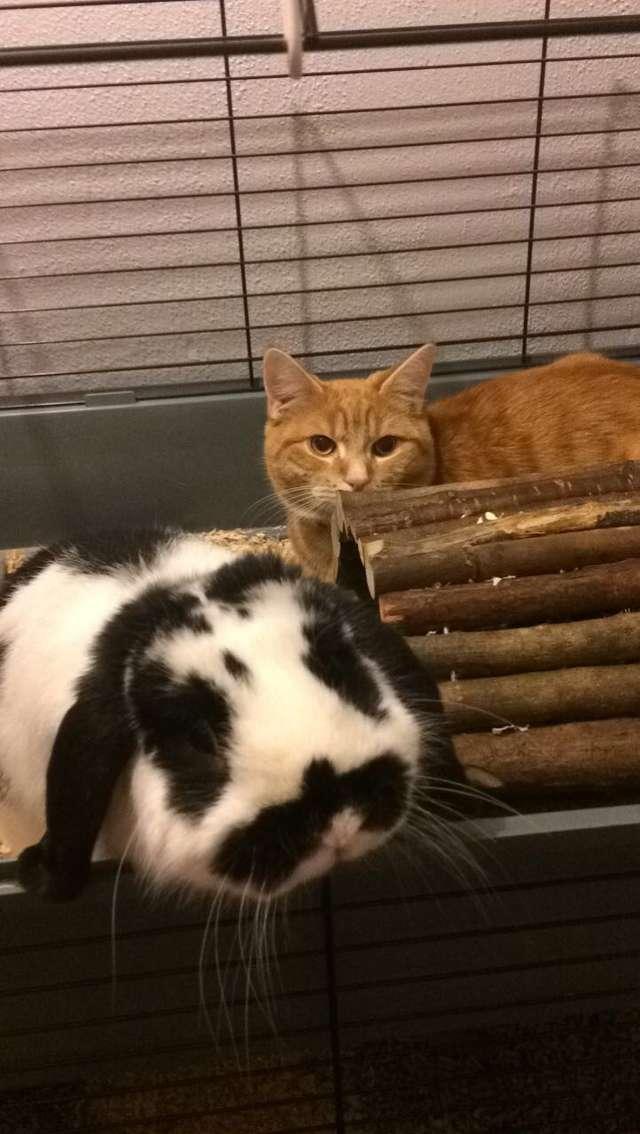 ウサギを見つめる猫