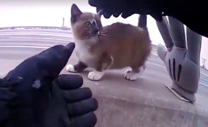 保護される子猫