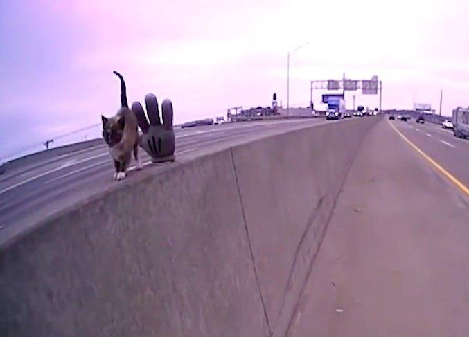 高速道路で見つかった子猫