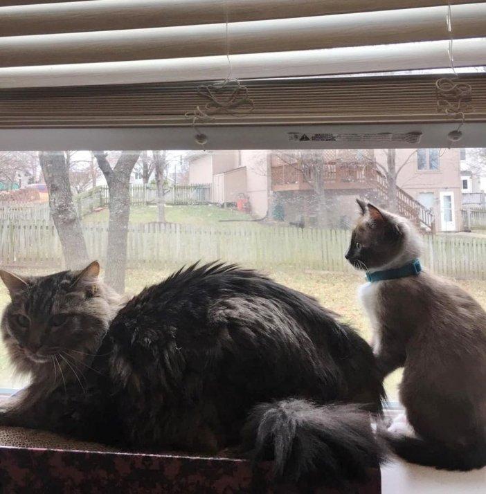 同居猫と子猫