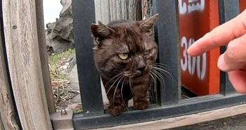強面な猫さん