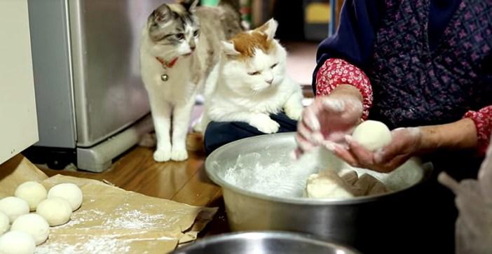 まんじゅう作りと猫