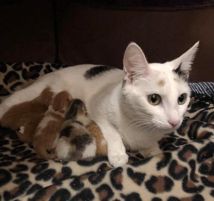 母猫と一緒の子猫