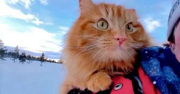 冒険好きの猫