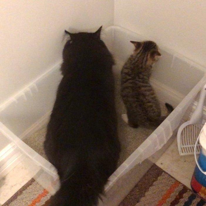 一緒の猫と子猫