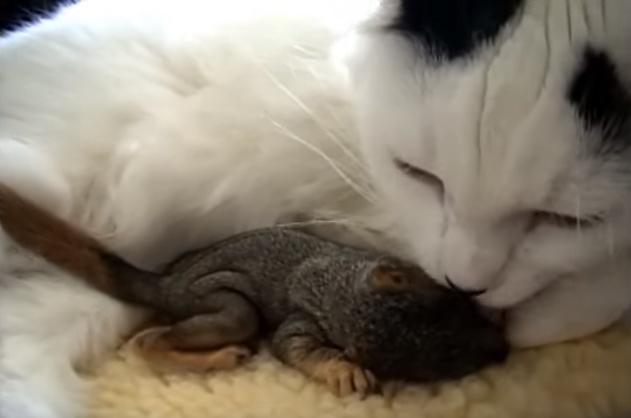 子リスを運んできた猫