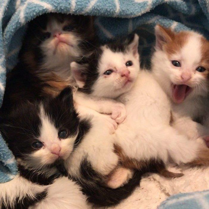 包まれる子猫達