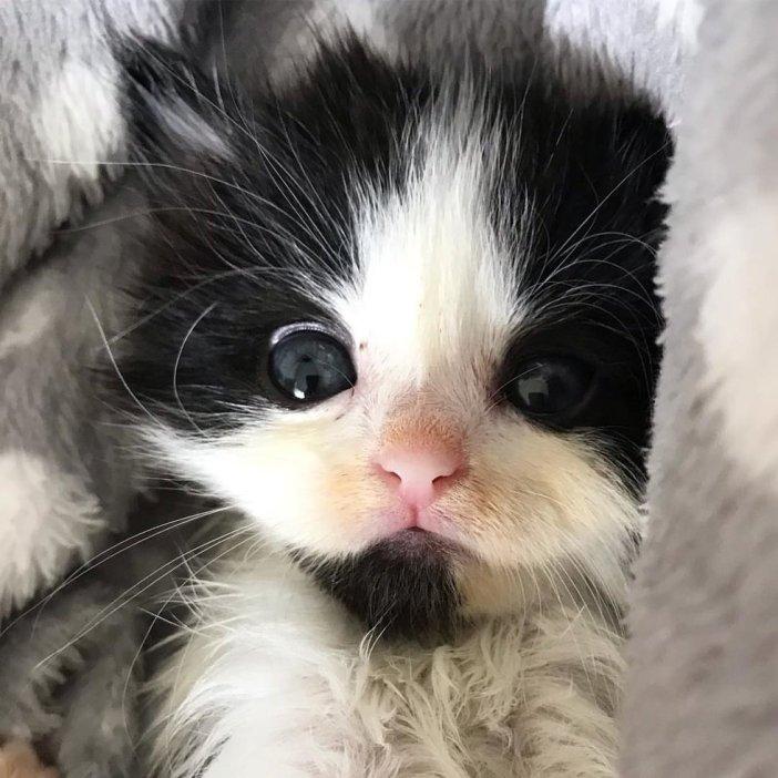 じっと見つめる子猫