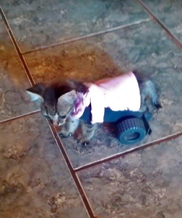 歩き始めた子猫