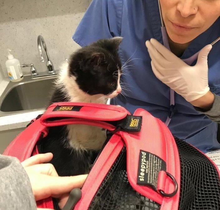 動物病院に行った子猫