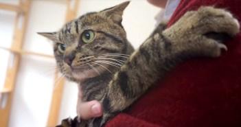 お父さんに抱っこされる猫