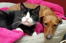 深い絆の犬と猫