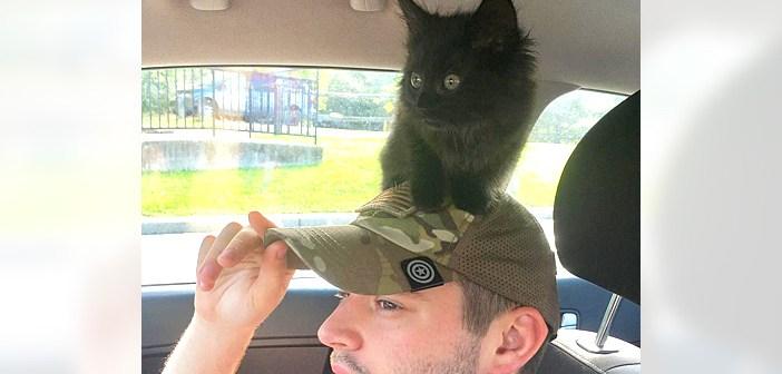 子猫を保護した男性