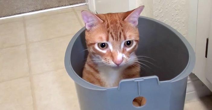 フィットする猫