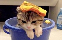お風呂に入る子猫