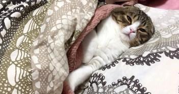 布団でまどろむ子猫