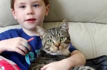 男の子を助けた猫