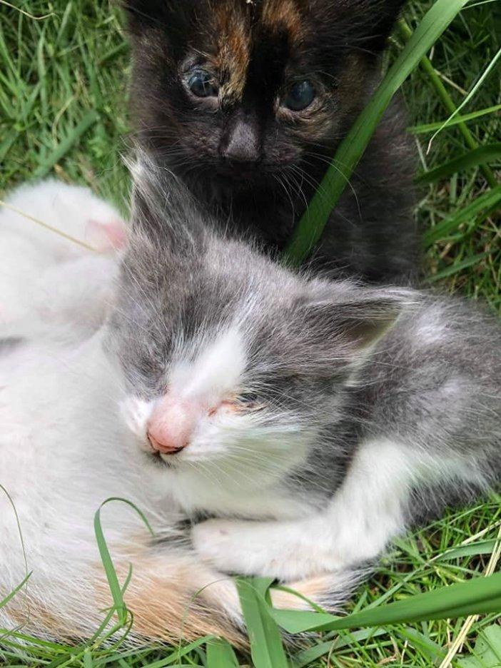 目が閉じた子猫