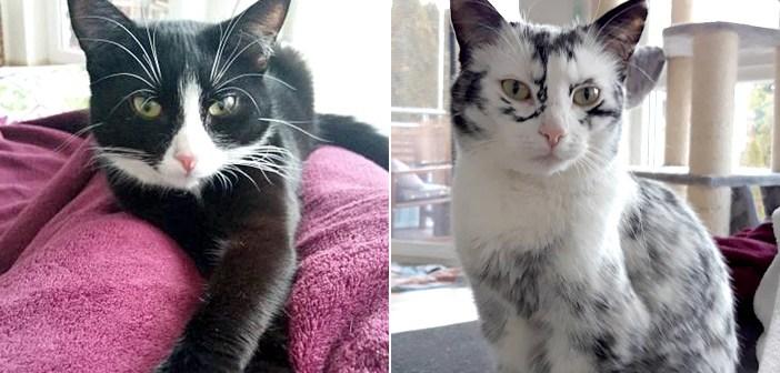 柄が変化した猫