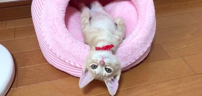 不思議な行動をする子猫